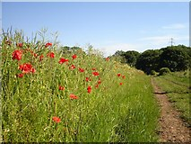 SP6134 : Wild Flower Meadow near Mixbury by Janine Forbes