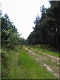 SE8094 : Cropton Forest  at SE803946 by Stephen Horncastle