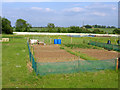 TL2044 : Allotments, Biggleswade, Beds by Rodney Burton