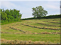SU0212 : Hay swaths Wimborne St Giles Dorset by Clive Perrin