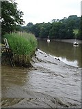 SX4268 : River Tamar from Cotehele Quay by Penny Mayes