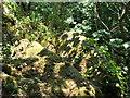 NU2214 : Ratcheugh Crag by Christine Westerback