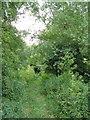 ST3123 : Widness Drove, Newport by Derek Harper