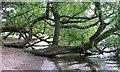 NY4522 : The Shore, Castlehows Point by Mick Garratt