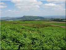 SO2718 : Patches in the bracken by Hugh Venables