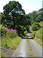 SJ1621 : Lane at Gwern y Glyn by Derek Harper