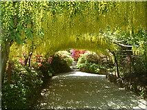 SH7972 : The Laburnum Arch at Bodnant Garden by Neil Kennedy