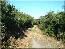 SH2332 : Lane at Meyllteyrn by David Medcalf