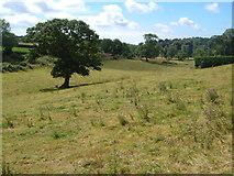 SX7649 : Field beside Green Lane near East Allington by Derek Harper
