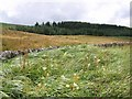 NY7186 : Field and forest near Stannersburn by Oliver Dixon