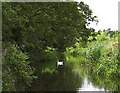 TL1814 : River Lee near Wheathampstead by Richard Thomas