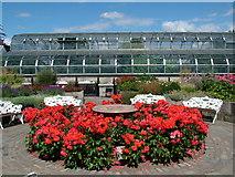 NJ9304 : Winter Gardens, Duthie Park, Aberdeen by Richard Slessor