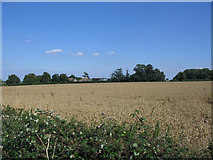 ST7879 : Parks Farm by Phil Williams