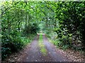 SK8455 : Track into Stapleford Wood by Andrew Tatlow