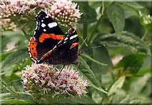 SX0588 : Butterfly at Tintagel by Pam Brophy