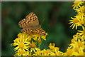 J1614 : Butterfly, Omeath forest, Carlingford Lough by Albert Bridge