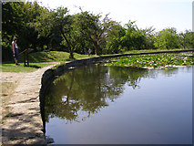 ST5038 : Pond within the abbey precinct, Glastonbury by Jim Champion