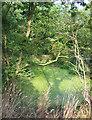SJ5840 : Small pond, Melverley Farm by Espresso Addict