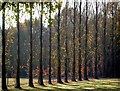 TQ6637 : Stand of Trees in Owl House Gardens, Lamberhurst by Stephen Nunney