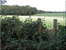 SK0540 : Greatgate Wood from the south by Dave Dunford