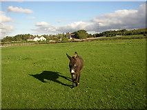 SE1220 : Donkey, Moor Hey Lane, Fixby by Humphrey Bolton