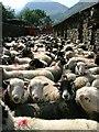 NY2312 : Bath Time, Seathwaite Farm by Mick Garratt
