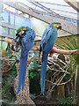 SJ6651 : Birds at the Palms Tropical Oasis by Kenneth  Allen
