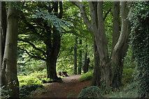 J4772 : Killynether Wood near Newtownards (1) by Albert Bridge