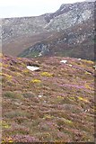 SH2082 : Heather and Gorse Near South Stack, Anglesey - 1 by Geoff Barber