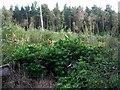 SK3063 : Farley Moor woodland near Matlock by Nikki Mahadevan