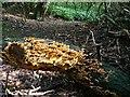 NZ5611 : Path, Newton Woods by Mick Garratt