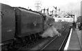 SU4112 : Mallard At Southampton by John Lucas