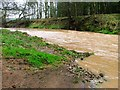 NZ4510 : River Leven, Scriddles Wood by Mick Garratt