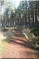 NJ3456 : Slorach's Wood by Anne Burgess