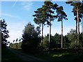 TM3549 : Rendlesham Forest SSSI (Fire route 4) by Simon Leatherdale