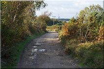 SZ0284 : Bridleway from Ferry Road to Greenlands Farm by Phil Champion