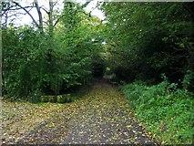 SK2952 : Pratthall Lane near Holehouse Farm by Mike Bardill