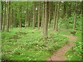 NS9493 : North Plantation, The Forest by Richard Webb