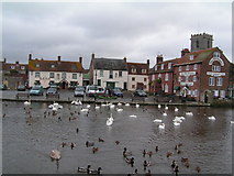 SY9287 : Swans & duck on the R. Frome, by the Quayside Wareham by N Chadwick
