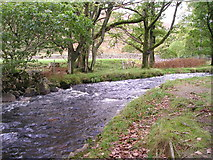 NY1700 : Whillan Beck at Dalegarth by Margaret
