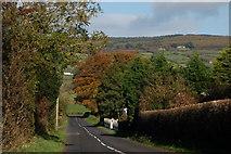 J3194 : The Lismenary Road, Ballynure by Albert Bridge