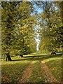 SE2386 : Avenue of elms by Oliver Dixon