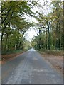 SP1029 : Autumnal avenue by Jennifer Luther Thomas