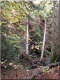 NY4020 : Fallen trees near Aira Force, Watermillock township, Matterdale by Humphrey Bolton
