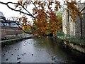 SU3645 : River Anton, Andover by Peter Jordan