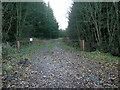NS8937 : Forest Track into Stonehill Wood by Iain Thompson