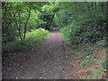NZ2479 : Woodland path by george hurrell
