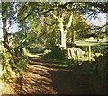 NY6532 : Track at Kirkland Hall, Culgaith CP by Humphrey Bolton