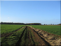 TF0322 : Track towards Bishopshall Wood, Grimsthorpe Park by Tim Heaton