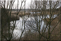 TA0623 : The Reedbeds in December by David Wright